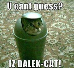Behold Dalek Cat! ~Doctor Who