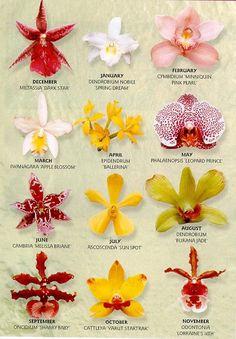 sugar orchid - Buscar con Google