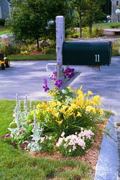 A combination of annuals and perennials makes a lovely cottage-style mailbox garden. This bed uses silvery-gray Lamb's-ears, which produce spikes of lavender blooms, along with gold daylilies, pink Torenia, and low-growing purple petunias and calibrachoa. A deep purple clematis climbs the mailbox post.