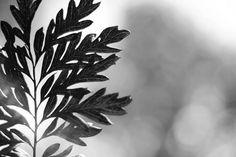 live like a leaf