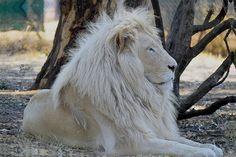 Kruger Nationaal Park, Zuid-Afrika