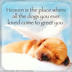 all dogs go to heaven xxx
