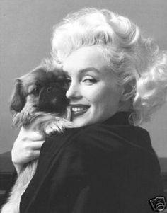 Marilyn Monroe with a peke