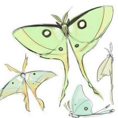 I would love a Luna Moth Tattoo!