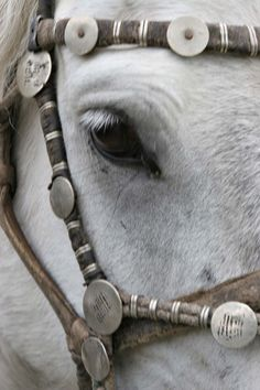 Mongol Horse, Lapis Sky Camp