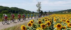 Tour de France 2015 – stage by stage   Sport   The Guardian