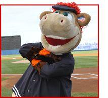 74d27c34826 12 Best Staten Island Yankees images