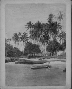 Road to Volcano. Volcano House, Outrigger Canoe, Hawaiian, Coconut, Canoes, Painting, Islands, Museum, Art