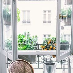 Less is more, right? We confess to adding ever more to our jungle. But this window is quite crisp, clear...  You, how does your garden grow?  .  .  #jardin #jardiniere #windowsill #reborddefenetre #paris #beautifulsmartwild #urbanjunglebloggers #yourcitygarden