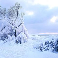 """4,667 Likes, 38 Comments - Parks Canada (@parks.canada) on Instagram: """"Point Pelee National Park offers a unique winter experience. Strap on your snowshoes and crunch…"""""""