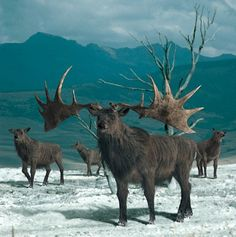 Irish Elk. This is what happens when you drink all your Guinness!