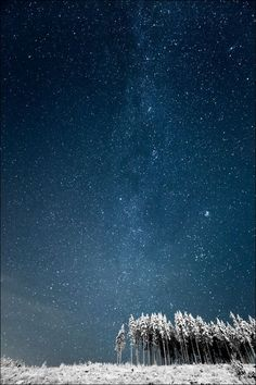 Milky Way and Finnish Forest