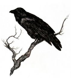 A raven tattoo is high on my list.