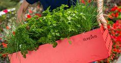 Hvor digg er det ikke med friske urter til middagen? Dyrk dem selv, da vel! Gartnertipsene får du her.