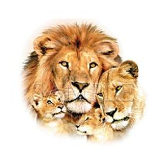 lion pride family portrait