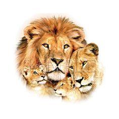 lion pride family portrait