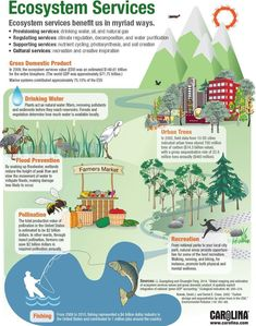 Science infographic and charts Infographic: Ecosystem Services Infographic Description Infographic: Ecosystem Services – Infographic Source – High School Science, Science Fair, Science Lessons, Life Science, Forensic Science, Tier Zoo, Ap Environmental Science, Chart Infographic, Interactive Infographic