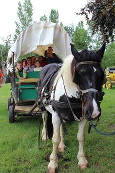 Ferme de l'Aoueille - roulottes + cabanes + moultes activités ferme  Pouylebon / Gers