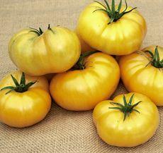 Tomato Azoychka