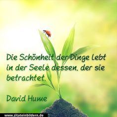 Zitate in Bildern Positive Words, Positive Quotes, Cool Words, Wise Words, Quotes To Live By, Life Quotes, Best Quotes, Funny Quotes, German Quotes