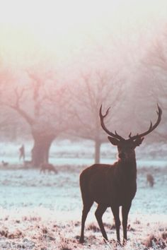 Because it's winter. And when you think winter you think deer. (And snow and Christmas and cold and hot chocolate. Beautiful Creatures, Animals Beautiful, Cute Animals, Pretty Animals, Animals Images, Tier Fotos, Mundo Animal, Jolie Photo, Nature Animals