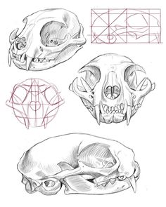 108 best Skull Anatomy images on Pinterest in 2018 | Male jewelry ...