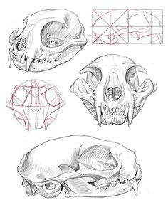 cat skull anatomy - Google Search                                                                                                                                                                                 Más