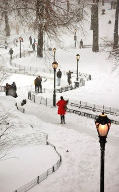 Snowy Central Park ~ New York