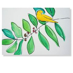 Budgie with coffee plant