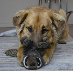 Puppy & Toy.