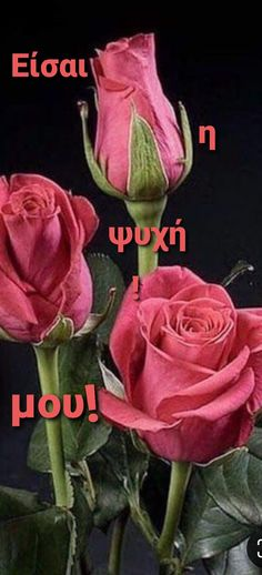 Forever Love, Greek Quotes, Rose, Flowers, Plants, Cards, Pink, Endless Love, Plant
