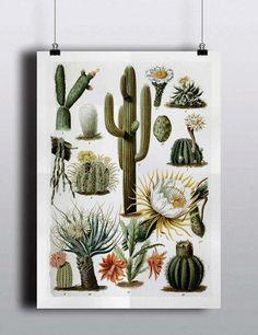 Antique 1800s Cactus Chart Poster Art Print Illustration Scientific Chart…