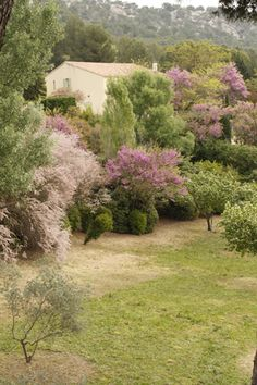 Spring-colors in Provence.