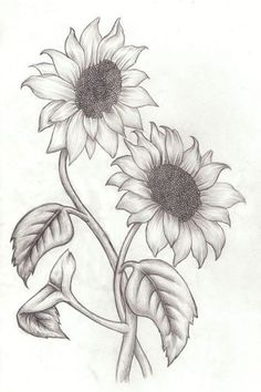 best 25 sunflower drawing ideas on sunflower tattoos Pencil Drawings Of Flowers, Pencil Art Drawings, Art Drawings Sketches, Easy Drawings, Art Sketches, Drawing Flowers, Flower Drawing Images, Realistic Flower Drawing, Sketches Of Flowers