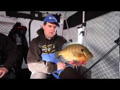 Big Baits for Plate Sized Bluegills