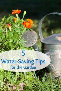5 Smart Ways to Save Water in the Garden