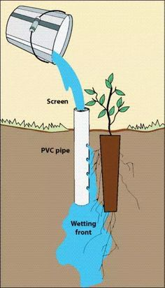 In order to let your plants get efficient watering, try this deep pot irrigation. Its work is by placing an open-ended PVC pipe next to a planted seedling Diy Gardening, Hydroponic Gardening, Container Gardening, Organic Gardening, Vegetable Gardening, Veggie Gardens, Small Space Gardening, Pvc Pipe Projects, Diy Garden Projects