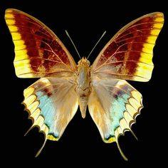 piękno motylich skrzydeł