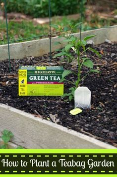 Did you know you can sprout seeds in a teabag?  This is an easy gardening tip and a great way to use up your used tea bags!