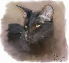 Count Zutti - oriental shorthair male Painted by hand with Corel Painter