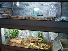 Ball python clear front stack rack enclosures. Haunted castle themed for fun!