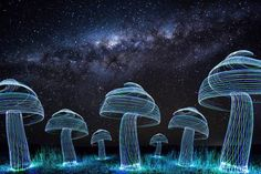 Australian Artist Conjures Up Amazing Light Paintings of Giant Mushrooms in His Backyard