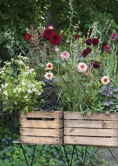 Could just drop bottomless crates over growing plats and make it look like it's in a container...hold peonies up!