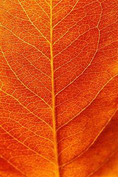 fall gardening - Google Search