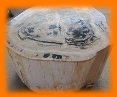 IndoGemstone Fossil Wood Table