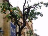 Valencia Oranges, Valencia, Spain