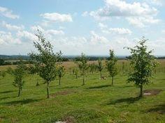 www.groenebegrafenis.be: verklein je ecologische voetafdruk tot op het laatste moment.