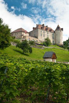 Vineyard, Castle of Gruyère, Switzerland