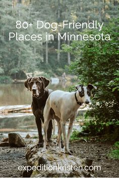 When it comes to spending time with your pup, Minnesota is full of dog-friendly places. Our dog comes with us on so many adventures and as long as he is well-behaved there are a plethora of businesses that welcome him! From lakes and parks to breweries, malls, and Airbnbs, there are a ton of places that not only allow dogs but welcome them with open arms. Read of for more than 80 ideas on where to go with your four-legged friend!