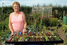 Pearl Taylor's pristine plot measures just 34 inches by 16 inches (she made tiny cuttings of grass, leaves and flowers to create plants for this amazing miniature allotment. Click through for more pics)